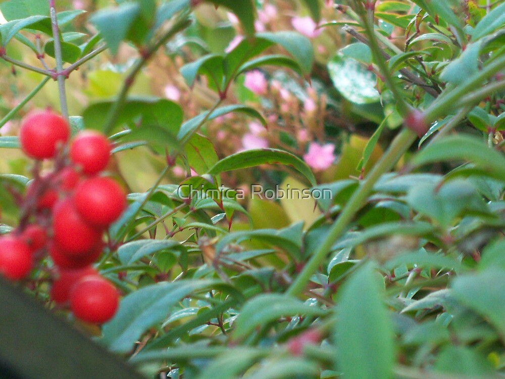 Berry Love by Chimica Robinson