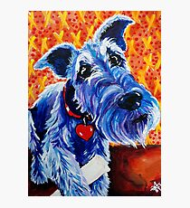 Blue Boy Terrier Airedale Sealyham Wheaten Lakeland Kerry Cesky Irish Schnauzer Welsh   Photographic Print