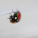 ladybird upside-down by mtths