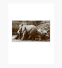 Elephants naptime Photographic Print