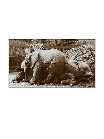 Elephants naptime by Paul Tremble