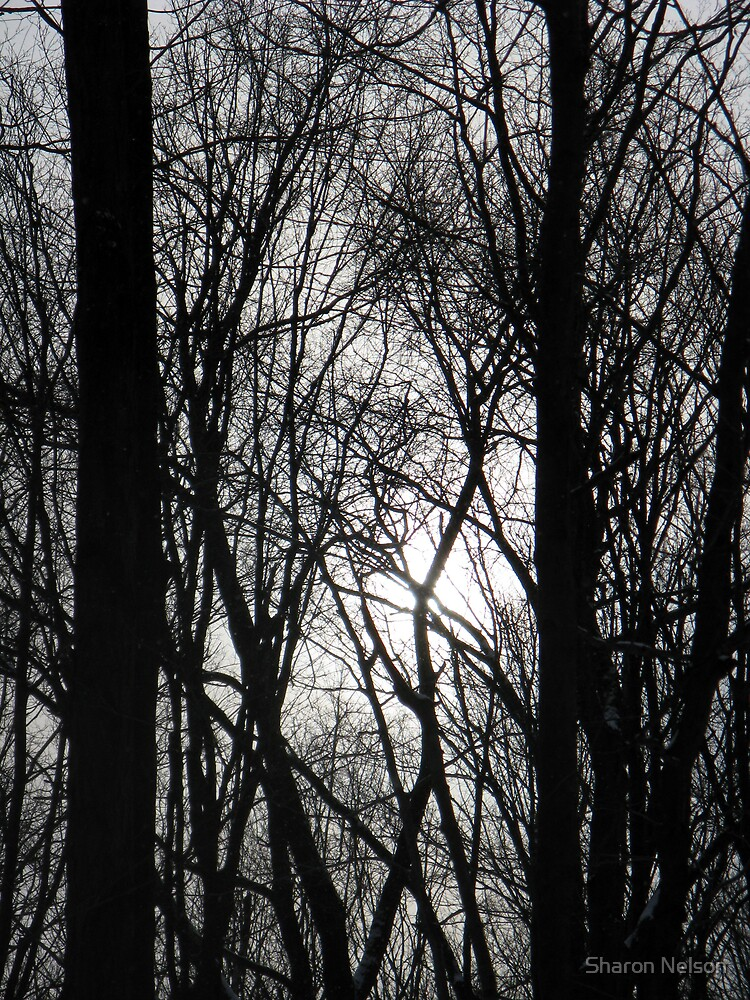 Gray Sky View by Sharon Nelson