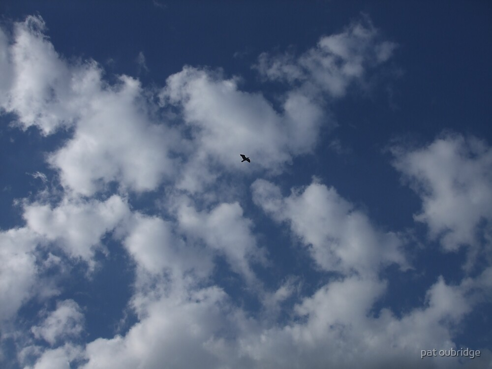 High Flyer by pat oubridge
