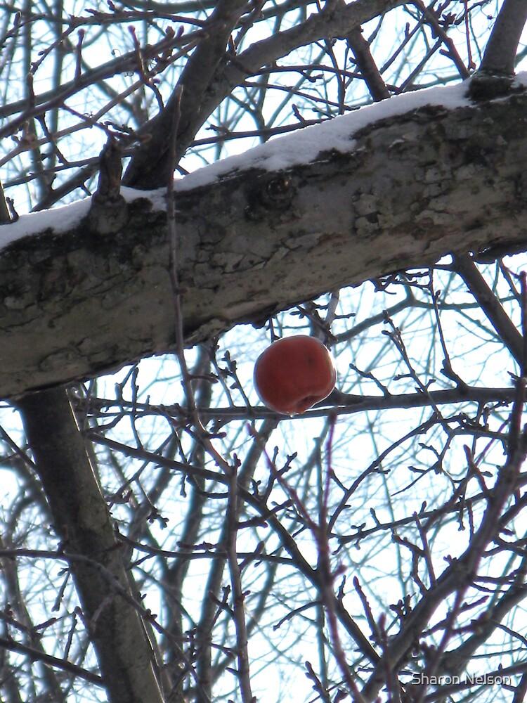 Winter's Last Apple by Sharon Nelson