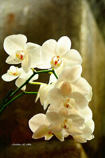 ORCHIDS ON CANVAS by Madeline M  Allen