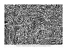 Flotsam ~ Tropical Essences by Kerryn Madsen-Pietsch