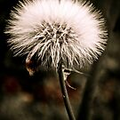 Just Dandy II by Suni Pruett