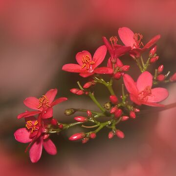 Pretty In Pink by BarbaraWilliams