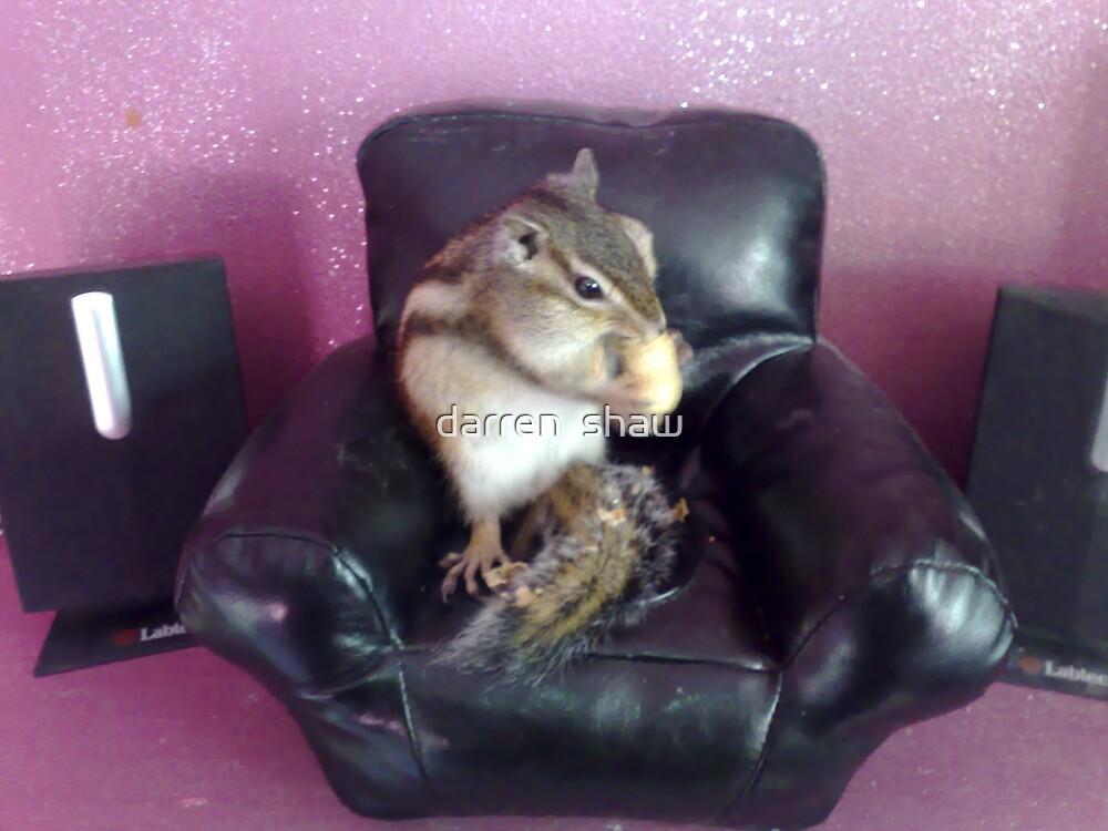 chipmunk chilling by darren  shaw