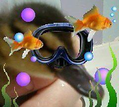 duck swimming under water by darren  shaw