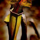 Pitcher-Plant by Jonicool