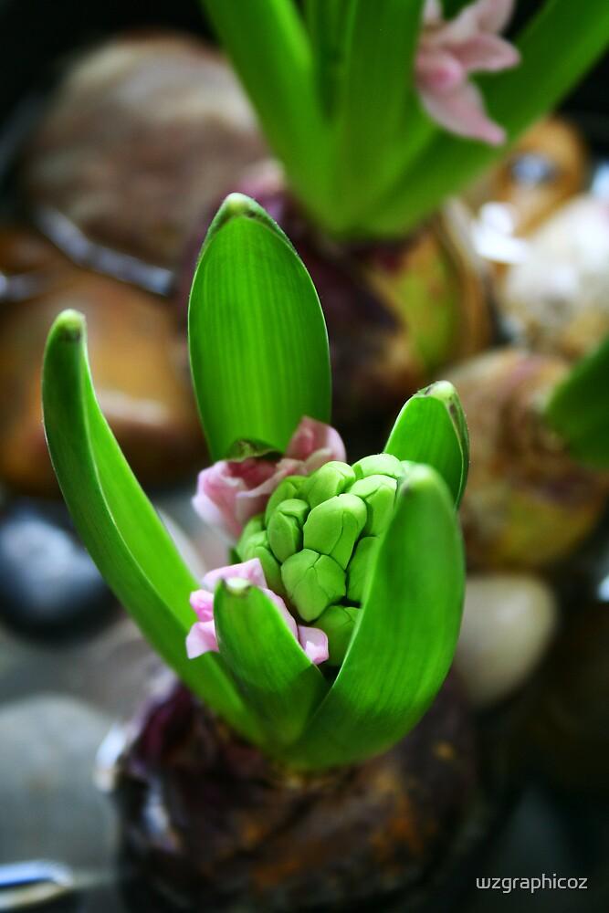 Baby hyacinth by wzgraphicoz