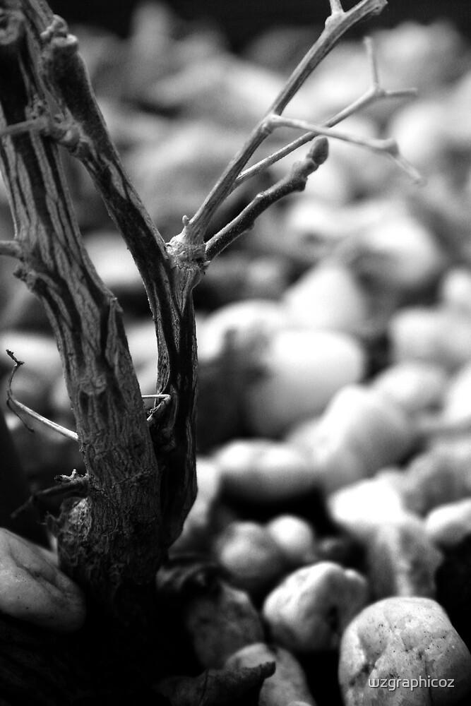 dried branch by wzgraphicoz