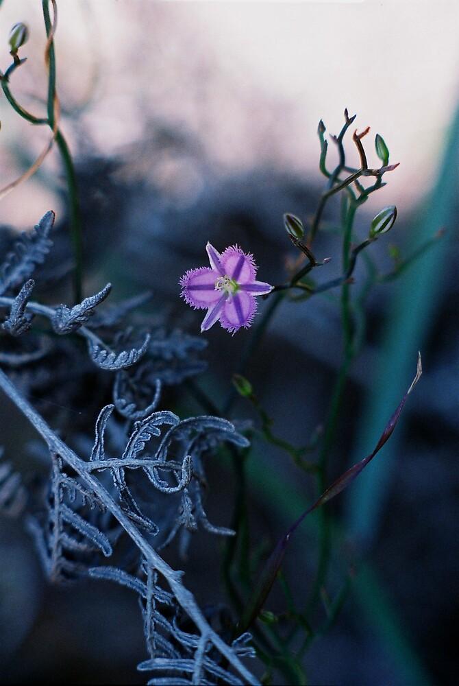 Lilac velvet by GreenHoodMaiden