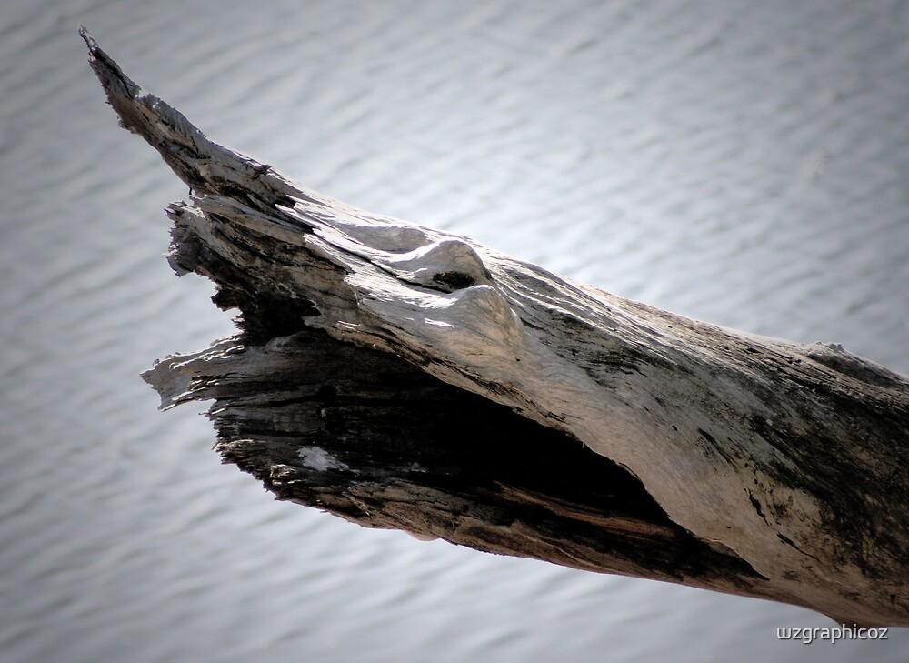 dried wood by wzgraphicoz