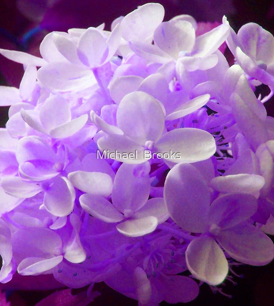 Purple Flowers by Michael  Brooks