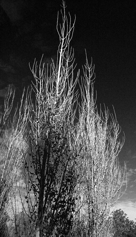 tree in black by wzgraphicoz