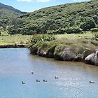 Marshland scenery......!  Great Barrier Island. by Roy  Massicks