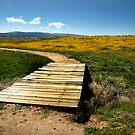 GoldFields and Poppies by ArieDee