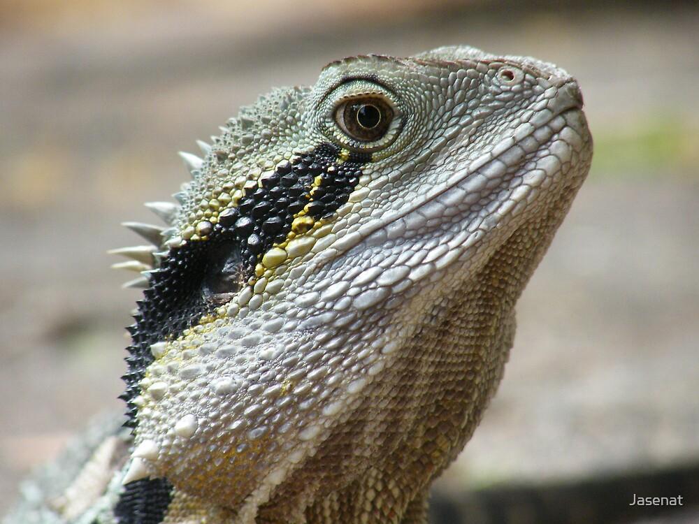 Wise Dragon by Jasenat