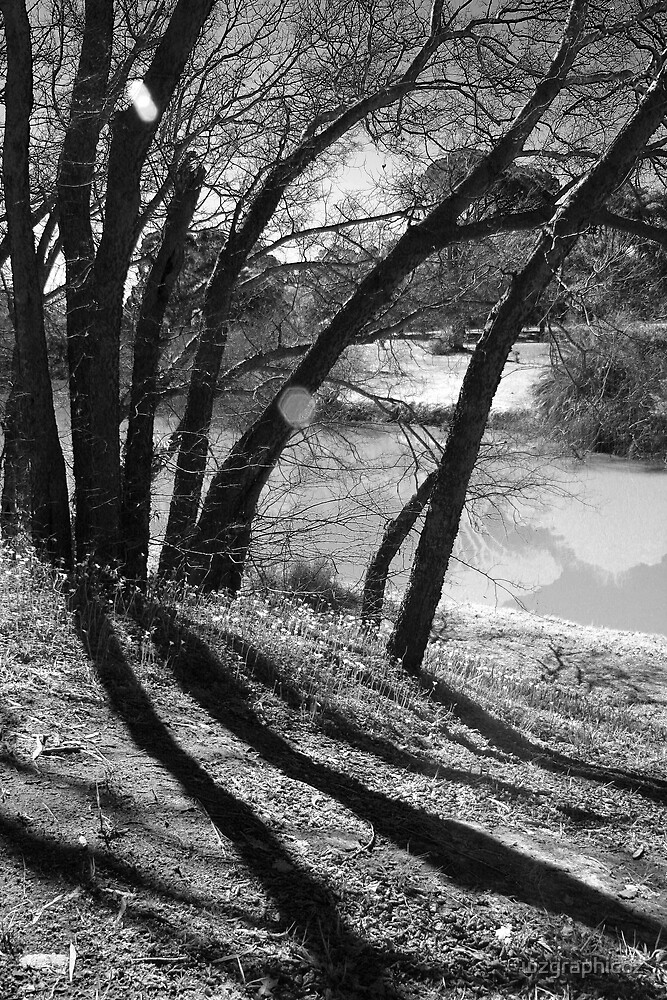 trees and shadow by wzgraphicoz