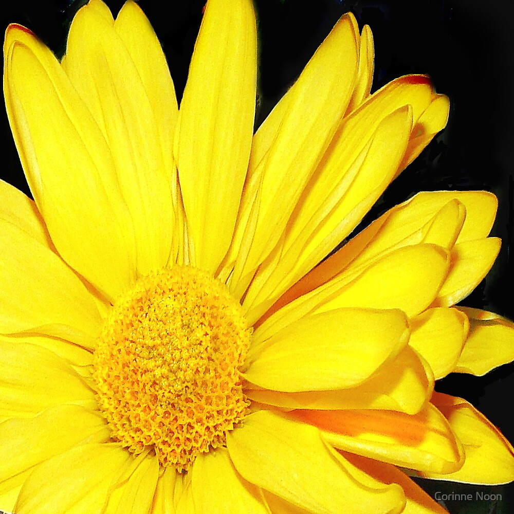 Yellow Flower by Corinne Noon