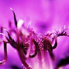 Das Herz einer Blume von Evita