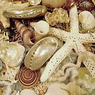 Shell Collection    127 Views by Rosalie Scanlon