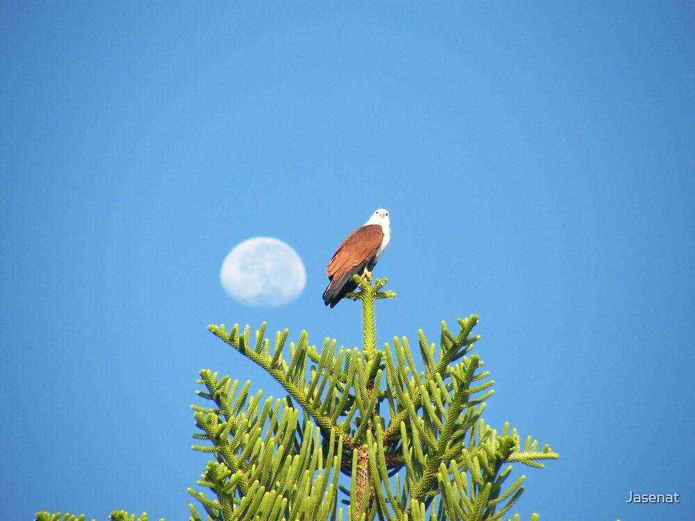 Moon Kite by Jasenat