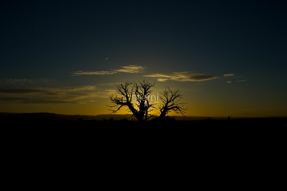 Tree at Sunset by steini