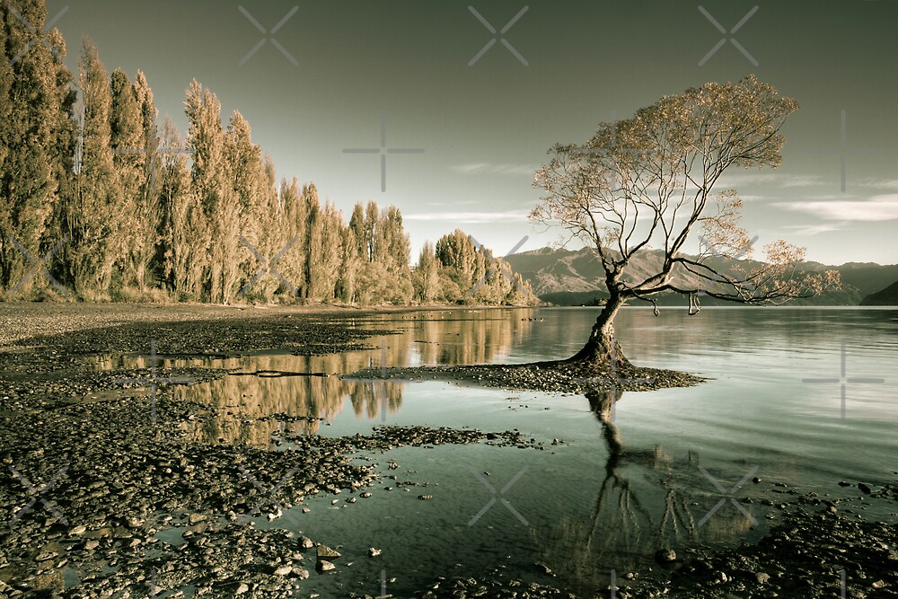 The Lake by Mel Brackstone