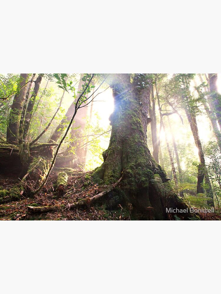 Enchanted Forest, Franklin-Gordon Wild Rivers National Park, Tasmania  by Chockstone