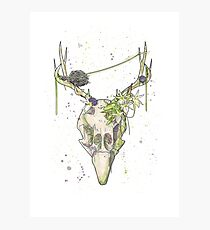Peacock Skull Photographic Print