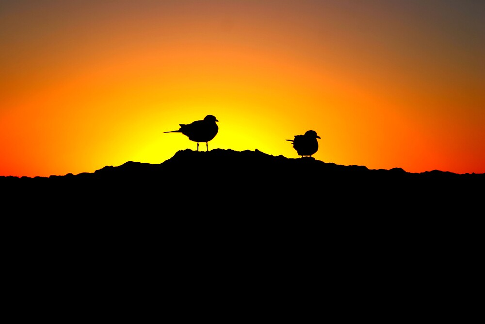 Seagulls at Sunset by justincase724