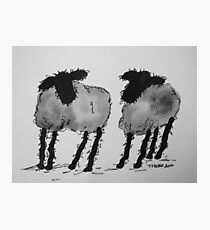Inky Sheep 3 Photographic Print
