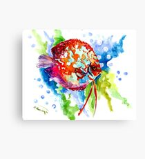 Rainbow Discus aquarium fish Artwork Canvas Print
