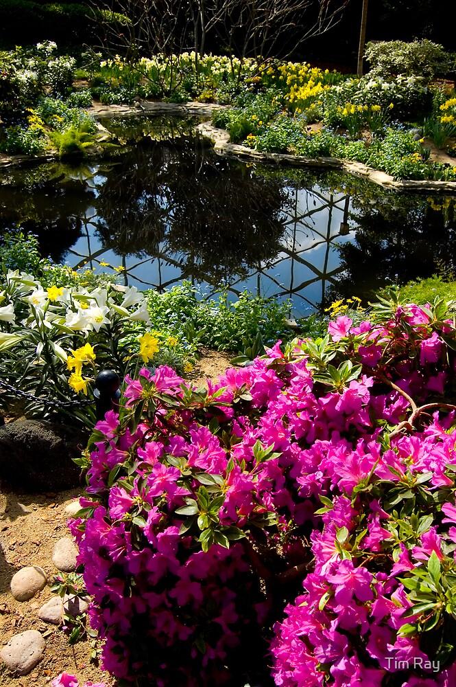 Flower Pond by Tim Ray