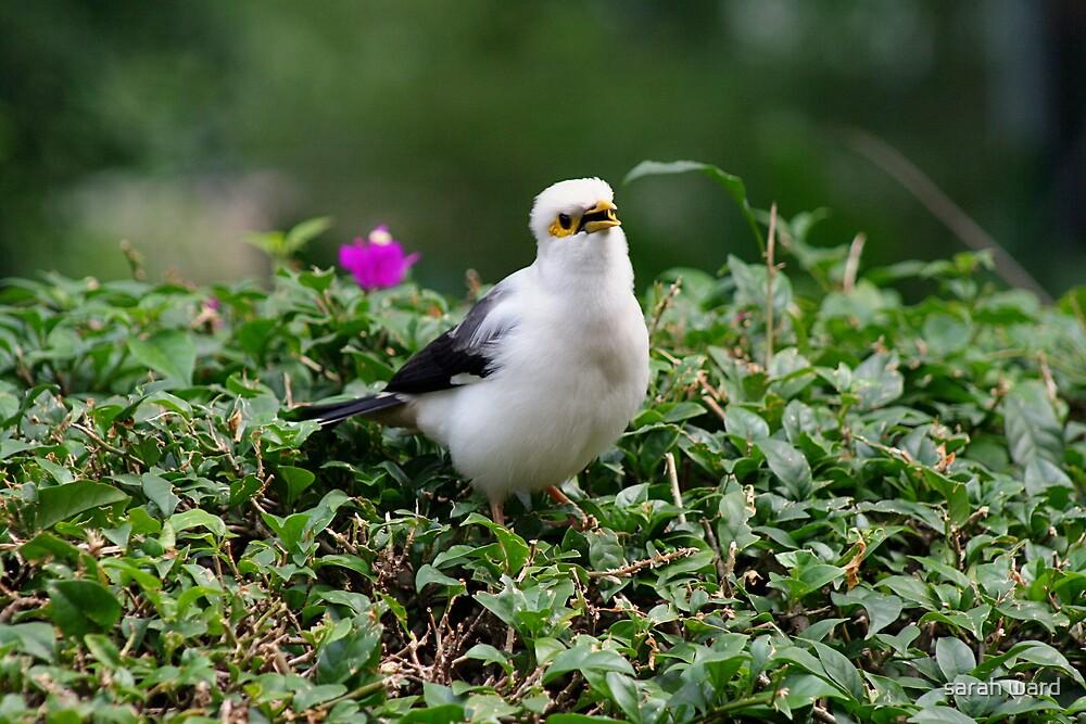 Little Bird by sarah ward