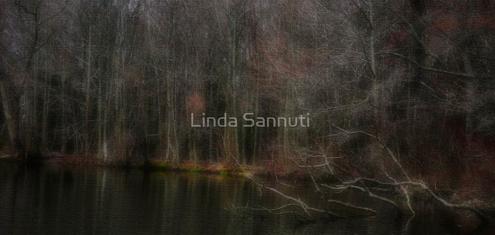 forest shadows by Linda Sannuti