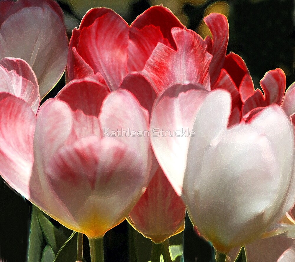 Pink And White by Kathleen Struckle