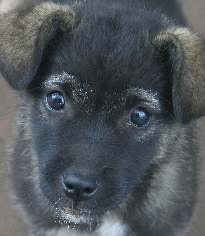 Puppy by tmeaddows