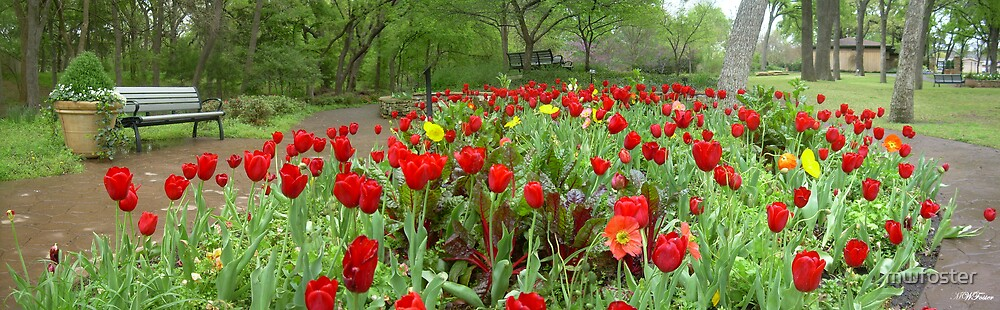 Tulips in the Park by mwfoster