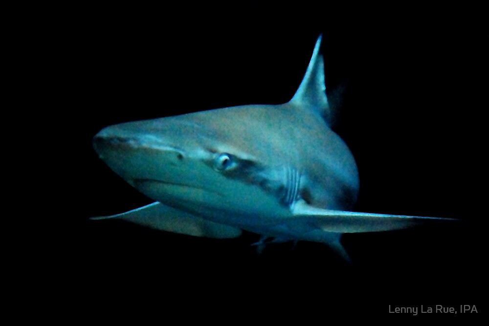 Shark! by Lenny La Rue, IPA