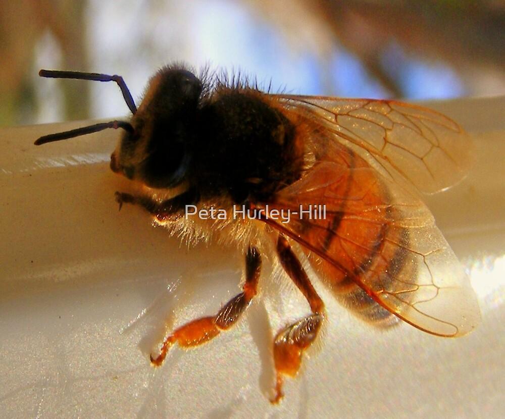Bee by Peta Hurley-Hill