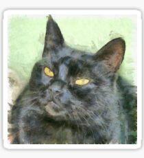 Black Cat Sticker