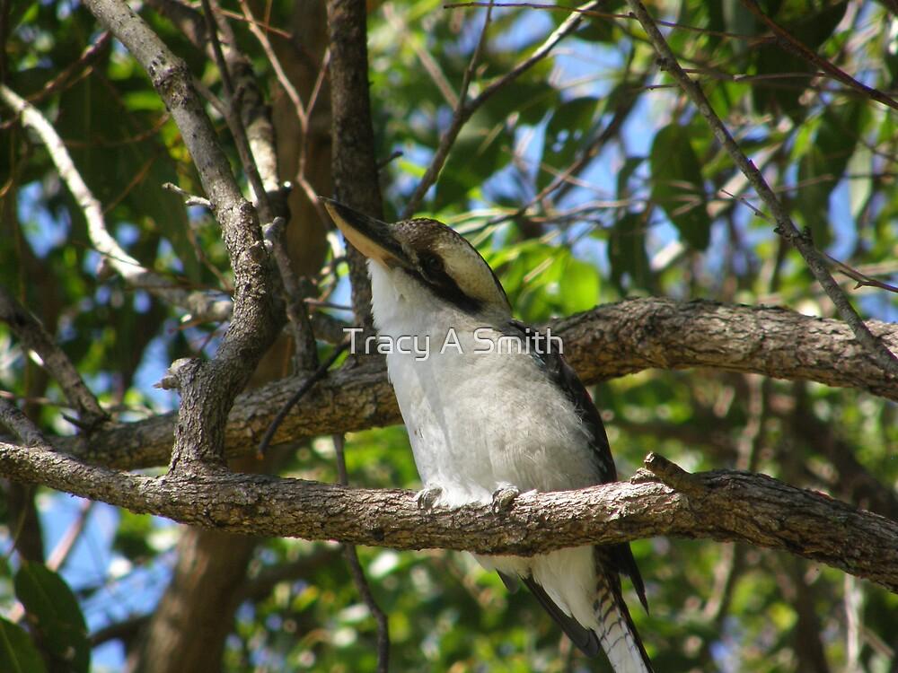 King Kookaburra by Tracy A Smith