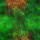 Verdant Summer - Evergreen by Richard Maier