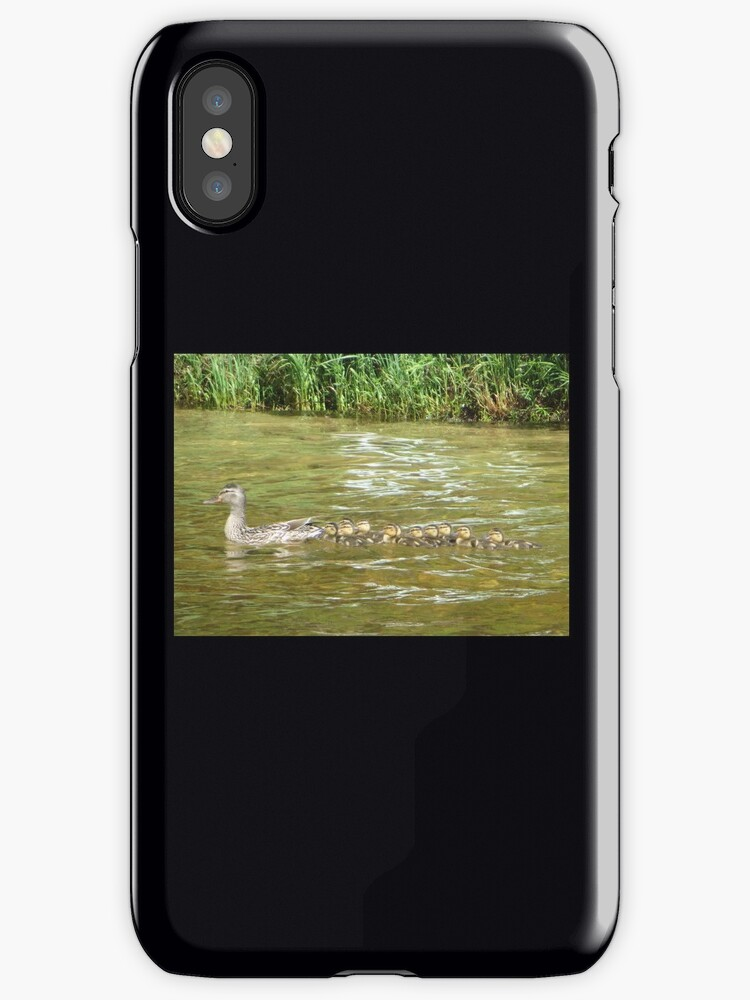 A Dozen Ducklings by Thomas Murphy