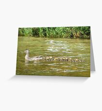 A Dozen Ducklings Greeting Card