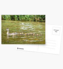A Dozen Ducklings Postcards